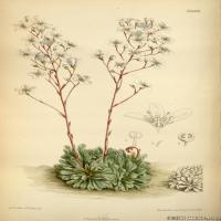 (32)高清植物花草印刷文档装饰图片