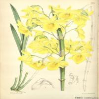 (27)高清植物花草印刷文档装饰图片