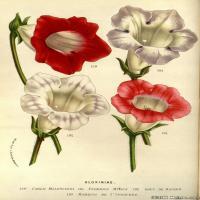 (20)高清植物花草印刷文档装饰图片