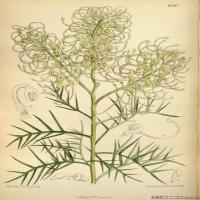 (30)高清植物花草印刷文档装饰图片