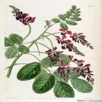(15)高清植物花草印刷文档装饰图片