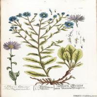 (42)高清植物花草印刷文档装饰图片