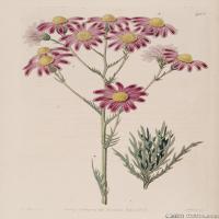 (18)高清植物花草印刷文档装饰图片