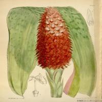 (34)高清植物花草印刷文档装饰图片