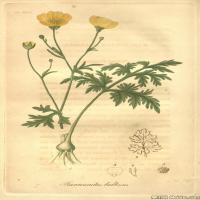 (22)高清植物花草印刷文档装饰图片