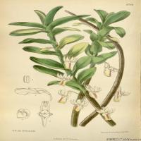 (36)高清植物花草印刷文档装饰图片