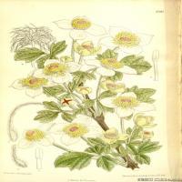 (23)高清植物花草印刷文档装饰图片
