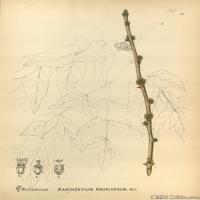 (16)装饰画欧美精品高端彩色植物立式图片