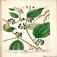 (18)装饰画欧美精品高端彩色植物立式图片