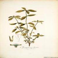 (10)装饰画欧美精品高端彩色植物立式图片
