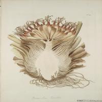 (25)装饰画欧美精品高端彩色植物立式图片