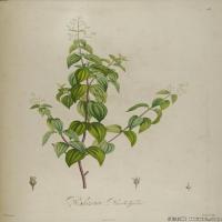 (3)装饰画欧美精品高端彩色植物立式图片