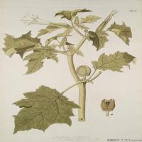 (4)装饰画欧美精品高端彩色植物立式图片