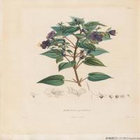 (29)装饰画欧美精品高端彩色植物立式图片