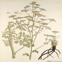 (23)装饰画欧美精品高端彩色植物立式图片