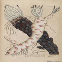 (2)装饰画欧美精品高端彩色植物立式图片