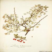 (5)装饰画欧美精品高端彩色植物立式图片