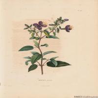 (21)装饰画欧美精品高端彩色植物立式图片