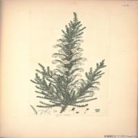 (30)装饰画欧美精品高端彩色植物立式图片