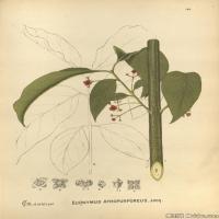 (13)装饰画欧美精品高端彩色植物立式图片