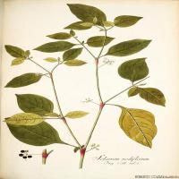 (12)装饰画欧美精品高端彩色植物立式图片