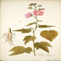 (6)装饰画欧美精品高端彩色植物立式图片