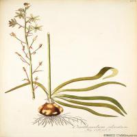 (7)装饰画欧美精品高端彩色植物立式图片