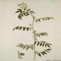 (22)装饰画欧美精品高端彩色植物立式图片