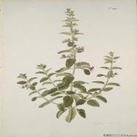 (15)装饰画欧美精品高端彩色植物立式图片
