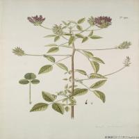 (9)装饰画欧美精品高端彩色植物立式图片