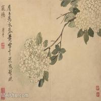 【印刷级】GH6062750古画恽寿平-花鸟图册8开(7)册页图片-89M-6027X4465