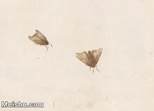 【印刷级】JXD6193890近现代国画草虫昆虫-齐白石全集图片-69M-.jpg
