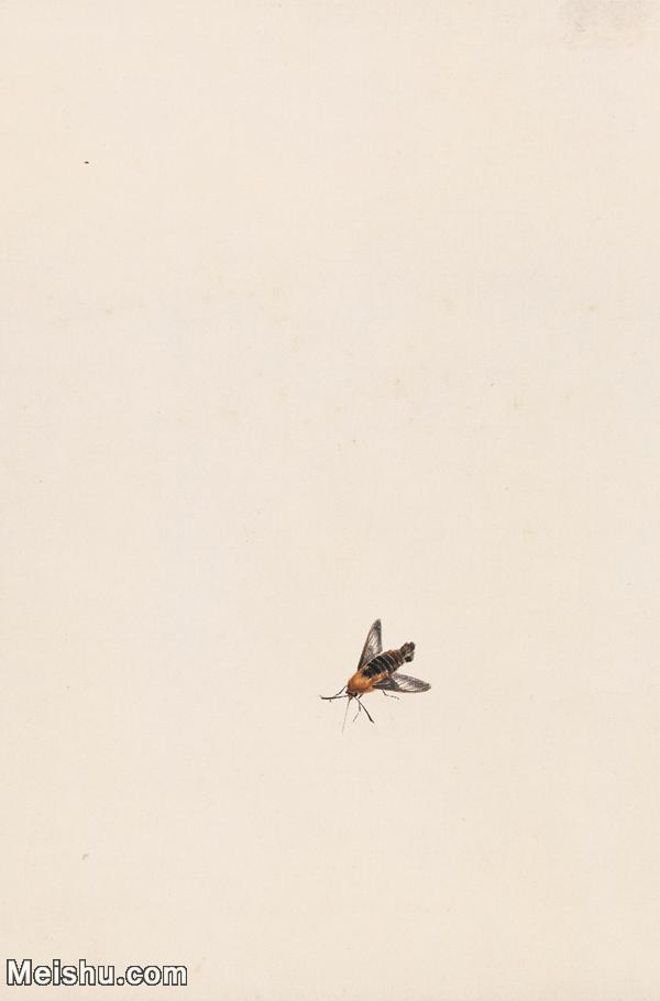 【印刷级】JXD6193889近现代国画草虫昆虫-齐白石全集图片-45M-.jpg