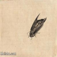 【印刷级】JXD6193886近现代国画草虫昆虫-齐白石全集图片-21M-