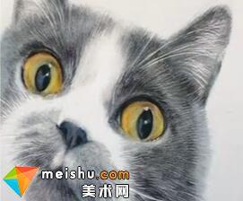 「彩铅猫狗绘 我的云养日记」-狗蛋-彩铅教程