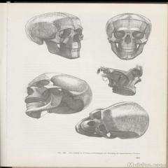 艺用人体解剖资料 (图解3)Anatomy