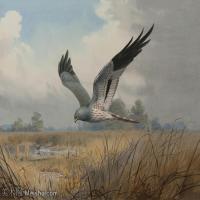 【打印级】YHR181455137-约翰西里尔哈里森John Cyril Harrison英国画家高清绘画作品集-36M-4120X3088