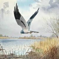 【打印级】YHR181455074-约翰西里尔哈里森John Cyril Harrison英国画家高清绘画作品集-21M-3199X2324