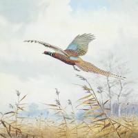 【欣赏级】YHR181455063-约翰西里尔哈里森John Cyril Harrison英国画家高清绘画作品集-20M-2285X3207