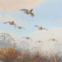 【欣赏级】YHR181455046-约翰西里尔哈里森John Cyril Harrison英国画家高清绘画作品集-20M-2214X3202
