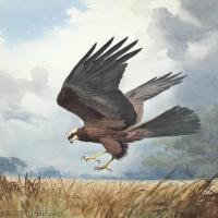 【欣赏级】YHR181455057-约翰西里尔哈里森John Cyril Harrison英国画家高清绘画作品集-20M-2270X3207