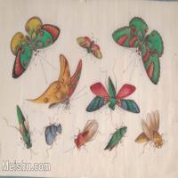 【欣赏级】GH6062932古画清代昆虫蝴蝶小品图册11册页图片-4M-1564X996