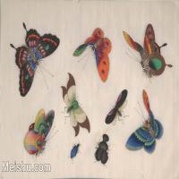 【欣赏级】GH6062940古画清代昆虫蝴蝶小品图册8册页图片-4M-1600X1007