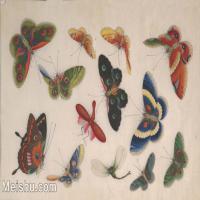【欣赏级】GH6062933古画清代昆虫蝴蝶小品图册12册页图片-4M-1592X1012