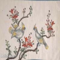 【欣赏级】GH6062893古画古代花鸟小品图册鹦鹉册页图片-4M-1604X1025