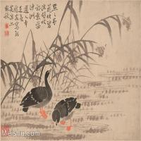 【印刷级】GH6061951古画边寿民-芦雁图十开(6)册页图片-68M-4875X3694