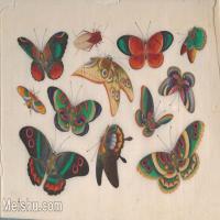【欣赏级】GH6062931古画清代昆虫蝴蝶小品图册10册页图片-4M-1571X1009