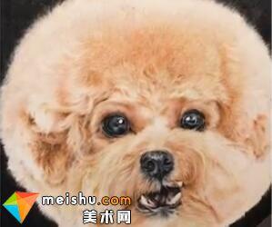 「彩铅猫狗绘 我的云养日记」-黄色泰迪-彩铅教程