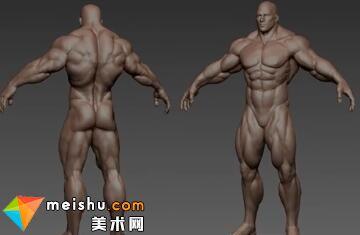 「轻微课」男性屁屁与女性屁屁的区别-人体结构与动态