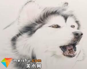 「彩铅猫狗绘 我的云养日记」-撕家-彩铅教程
